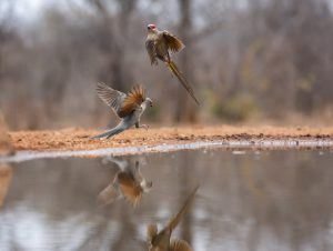 Stop the action for fast moving birds with continuous shooting and a fast shutter speed