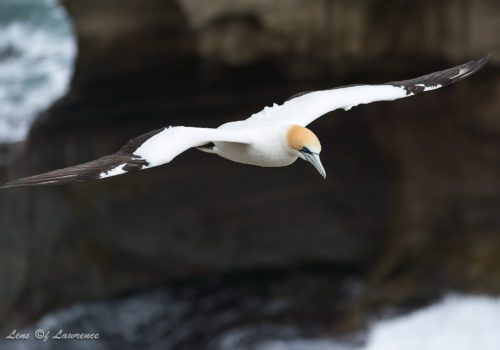 How to Photograph Flying Birds – Photographing Birds in Flight is Fun