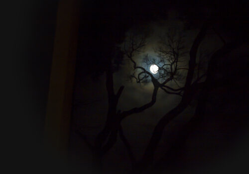 Silhouette of a tree with the moon in the background