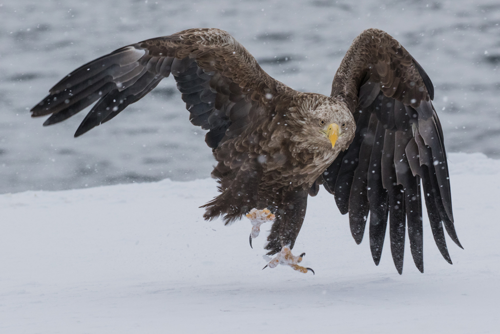 Cold Weather Photography Tips Snow Eagle