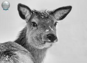Cold Weather Photography Tips Deer in snow