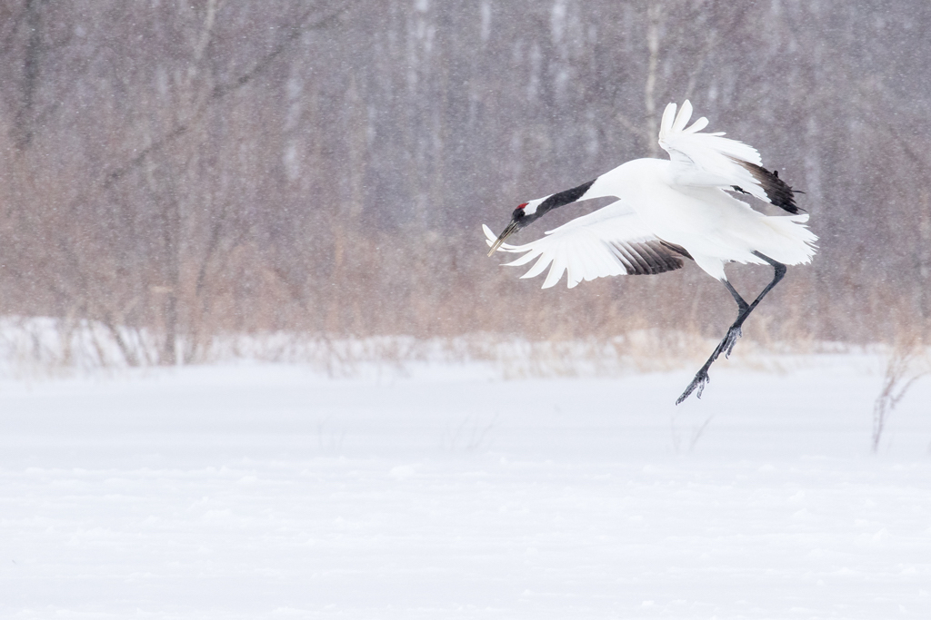 Cold Weather Photography Tips White Stork